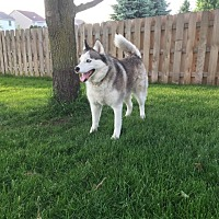 Adopt A Pet :: Kaya - Crystal Lake, IL