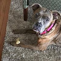 Adopt A Pet :: June - Flint, MI