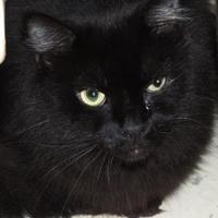 Adopt A Pet :: Zoe aka Pansy - Westville, IN