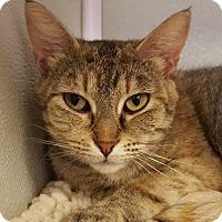 Adopt A Pet :: Zelena - Grayslake, IL