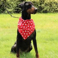 Doberman Pinscher Mix Dog for adoption in Grand Prairie, Texas - Sloan