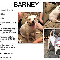 Adopt A Pet :: Barney - Fort Wayne, IN