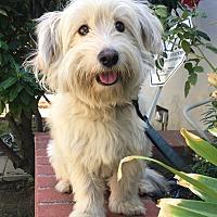 Adopt A Pet :: Sean - Canoga Park, CA