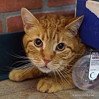 Adopt A Pet :: Fitzroy - Tucson, AZ