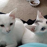 Adopt A Pet :: Albert - Chino Hills - Chino Hills, CA