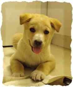 Labrador Retriever Mix Puppy for adoption in Okotoks, Alberta - Angel