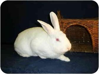 Florida White Mix for adoption in Newport, Delaware - Spencer