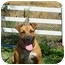 Photo 3 - Rhodesian Ridgeback/Boxer Mix Dog for adoption in El Cajon, California - Lucy