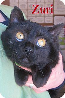 Domestic Shorthair Cat for adoption in Menomonie, Wisconsin - Zuri