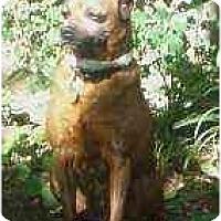 Adopt A Pet :: Sunny - Florissant, MO