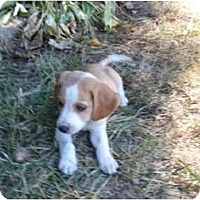 Adopt A Pet :: Bailey PENDING - Indianapolis, IN