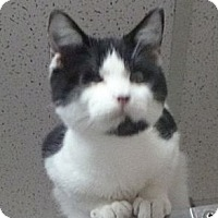 Adopt A Pet :: Sprocket - St. Petersburg, FL