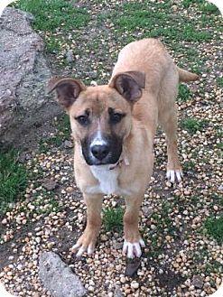 Shepherd (Unknown Type) Mix Dog for adoption in Philadelphia, Pennsylvania - Jane