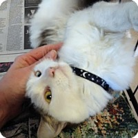 Adopt A Pet :: Lemon Charlotte rolls over - McDonough, GA