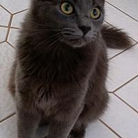Adopt A Pet :: Carmen Silva - Sunny Isles Beach, FL