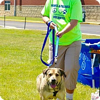 Adopt A Pet :: Bella - Middletown, OH