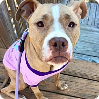 Adopt A Pet :: Wilma - Atlanta, GA