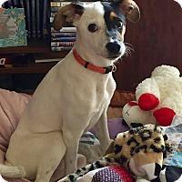 Adopt A Pet :: Tootie - Owensboro, KY