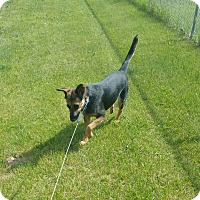 Adopt A Pet :: Ginger - Chippewa Falls, WI