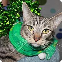 Adopt A Pet :: Jenna - Erwin, TN