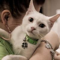 Adopt A Pet :: Patrick - Wichita, KS