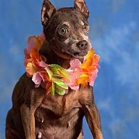 Adopt A Pet :: Helen - Sarasota, FL