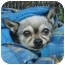 Photo 1 - Chihuahua Dog for adoption in Studio City, California - Mingo