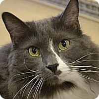Adopt A Pet :: Tommy - North St. Paul, MN