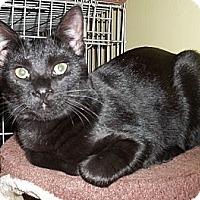 Adopt A Pet :: Harlem - Acme, PA
