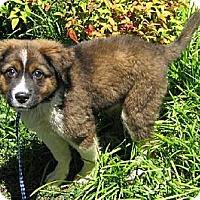 Adopt A Pet :: Effee~meet me @ PetSense~ - Westbrook, CT