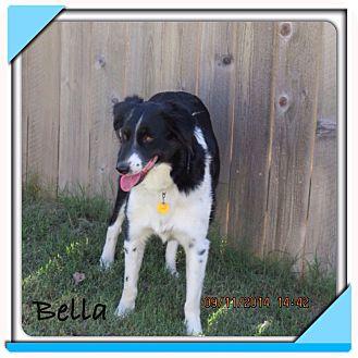 Border Collie/Australian Shepherd Mix Dog for adoption in San Antonio, Texas - Bella