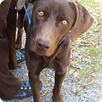 Adopt A Pet :: Gunner - Marlton, NJ