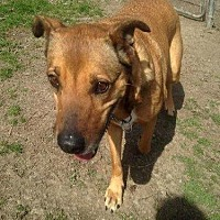Shepherd (Unknown Type) Mix Dog for adoption in Albemarle, North Carolina - Yolanda