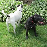 Adopt A Pet :: Davey - Wood Dale, IL