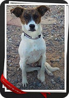 Australian Shepherd Mix Puppy for adoption in Apache Junction, Arizona - Ariel