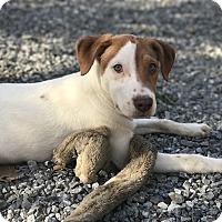 Adopt A Pet :: Kylo Star wars litters - Redding, CA