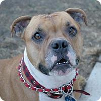 Adopt A Pet :: Hank - Sacramento, CA