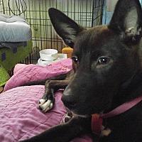 Adopt A Pet :: Moxie - Billerica, MA