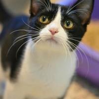 Adopt A Pet :: Calvin (CH) - Aiken, SC