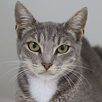 Adopt A Pet :: Grace Lynn - Pacific Grove, CA