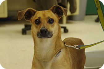 Terrier (Unknown Type, Small) Mix Dog for adoption in Elyria, Ohio - Peanut-Prison Graduate