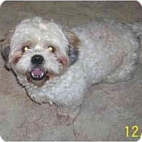 Adopt A Pet :: Gizmo - Evansville, IN