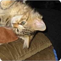 Adopt A Pet :: Dora (and Wuss) - Syracuse, NY
