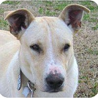 Adopt A Pet :: Waggs 2 - Allentown, PA