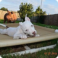 Adopt A Pet :: Piglet - Killen, AL