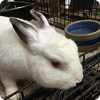 Adopt A Pet :: Merlin II - Williston, FL