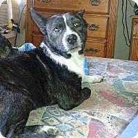 Adopt A Pet :: Hootie - Northumberland, ON