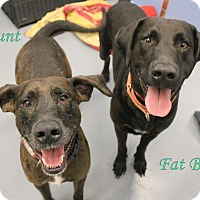 Adopt A Pet :: Runt and Fat Boy - Winter Haven, FL