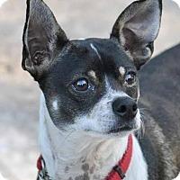 Adopt A Pet :: Tater - Ormond Beach, FL