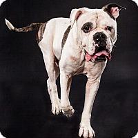 Adopt A Pet :: Hudson - Waller, TX